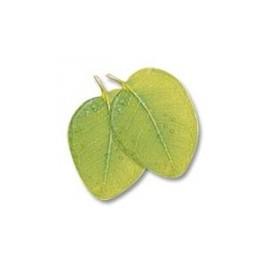Huiles essentielles Camylle pour spa - Eucalyptus