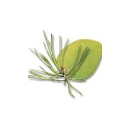 Huiles essentielles Camylle pour bain, balnéo - Eucalyptus / Pin